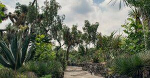 Jardín botánicos de la UNAM