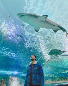 El techo de cristal del Aquarium es una de sus mayores atractivos, ¡espectacular!