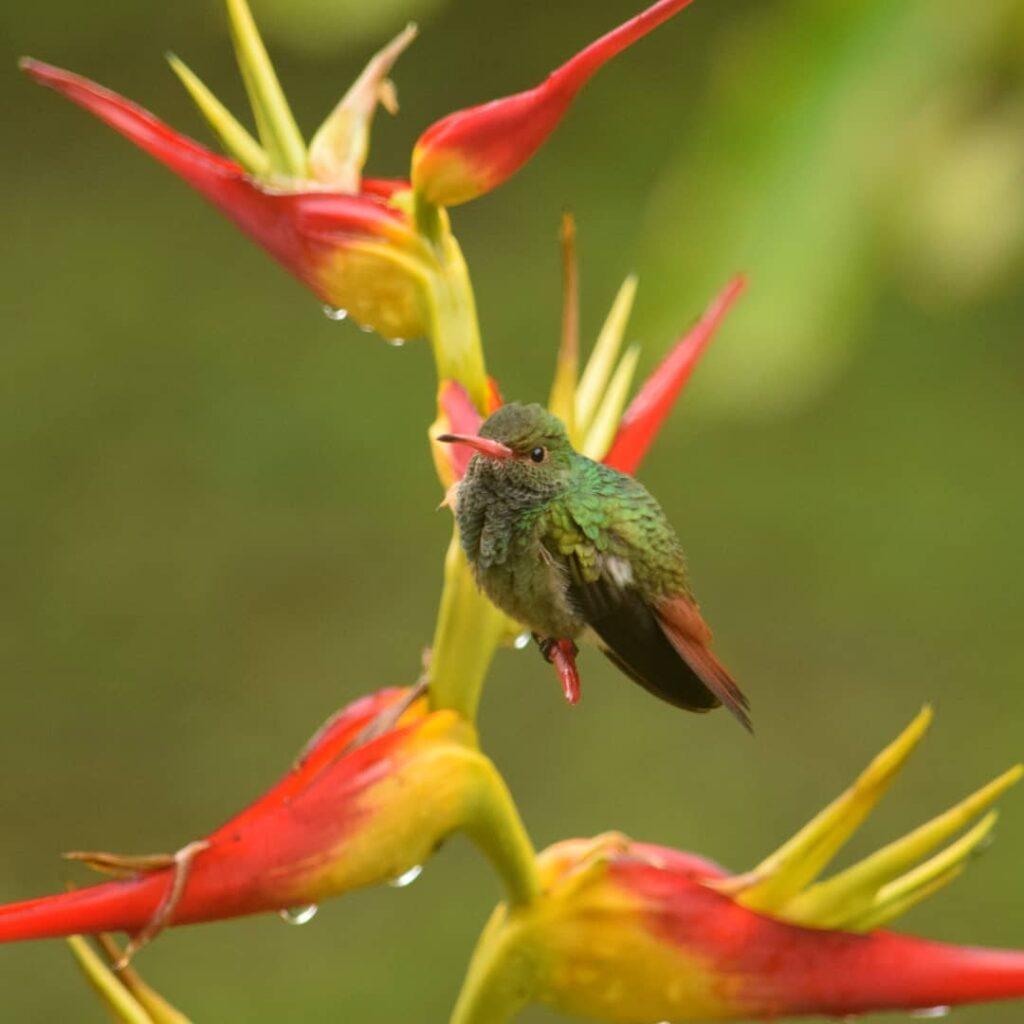 Parque Nacional Natural Tatamá-Avistamiento de aves