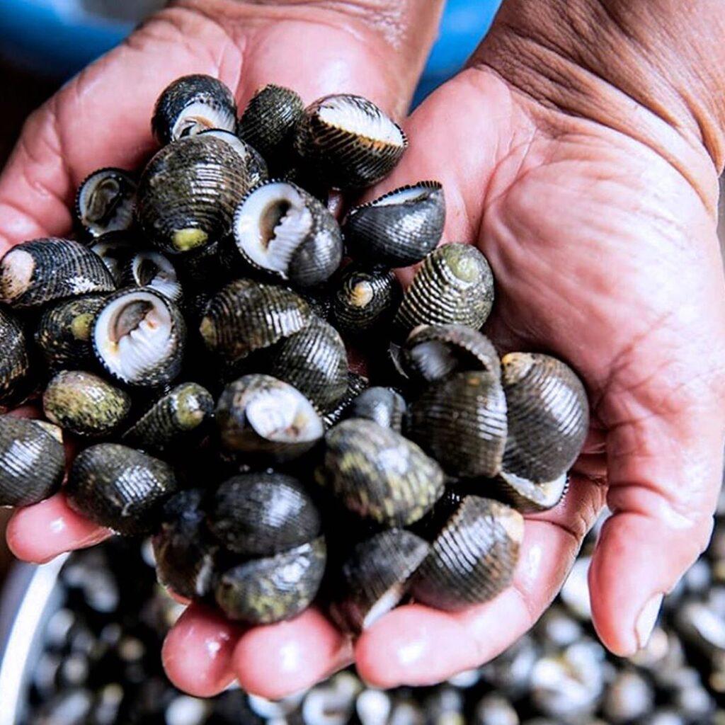 Churuleja de Coquí-Ingredientes ancestrales de Colombia