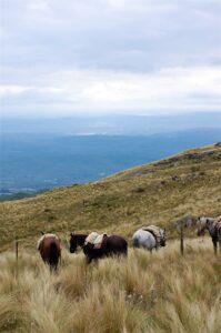 Valles Serranos