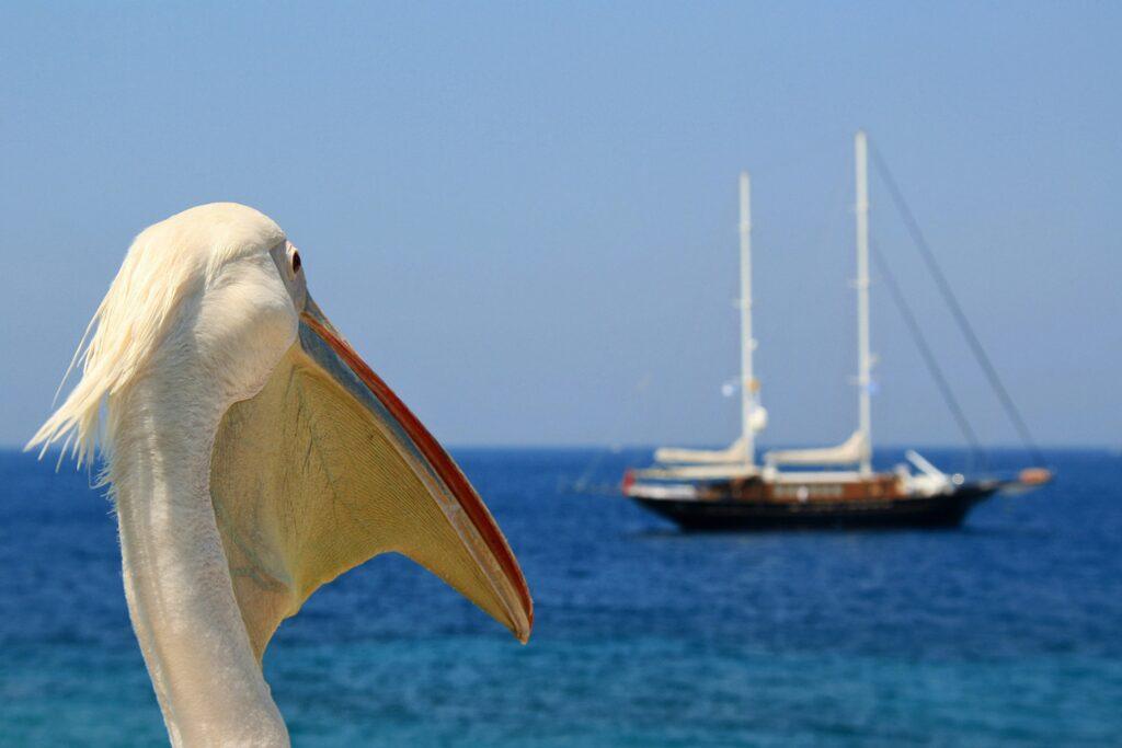 mikonos, barco, pelícano