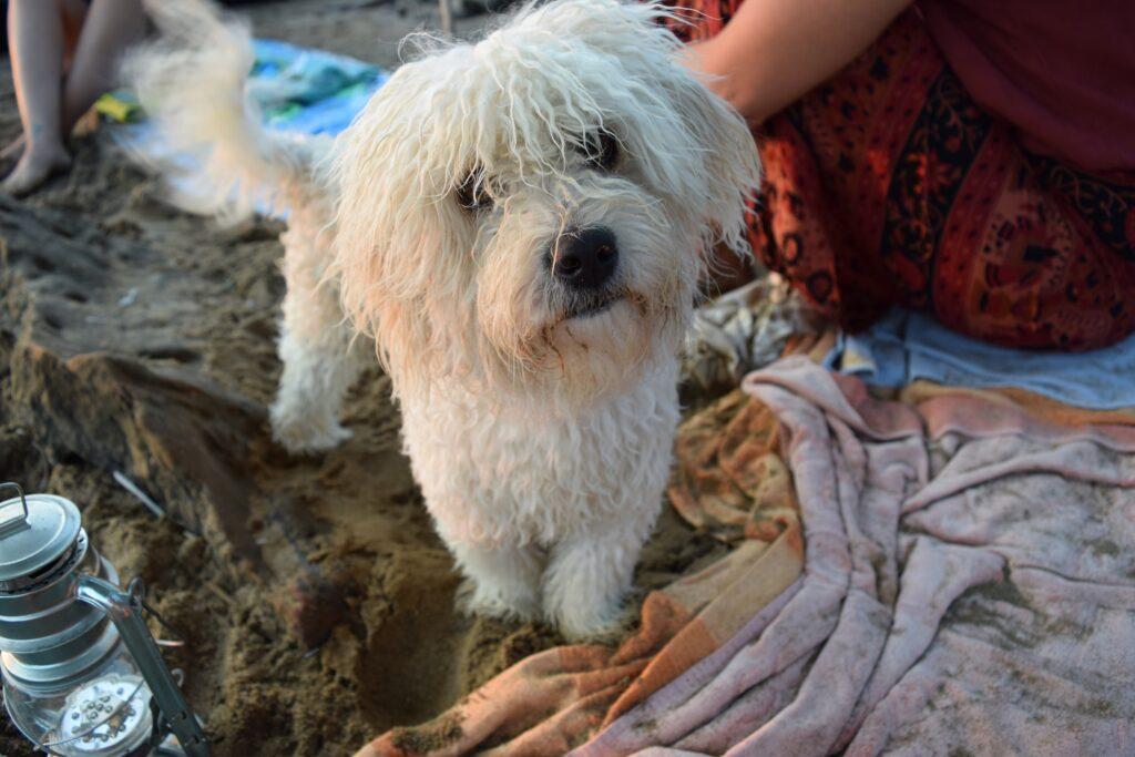 Viajar con mascotas a Grecia