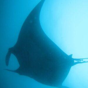 alt buceo y submarinismo en galápagos